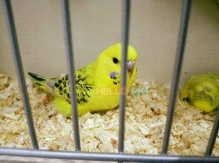 Parrots TCB beauty