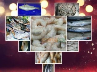 Frozen seafood at your door step
