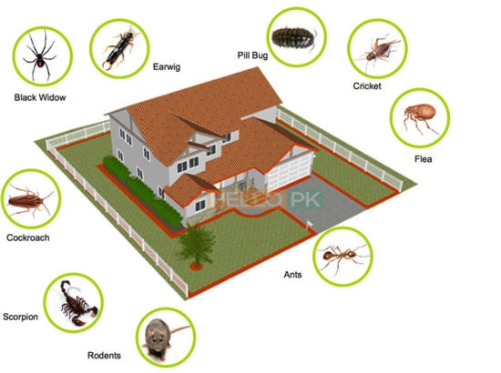 Get Pest Free Environment With ISO Certified Company