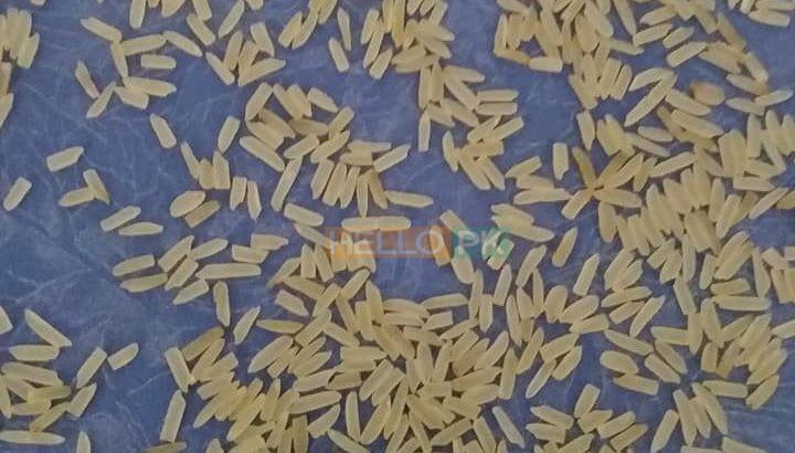 1121 sella ki short grain sortex vip 100% puer mal available