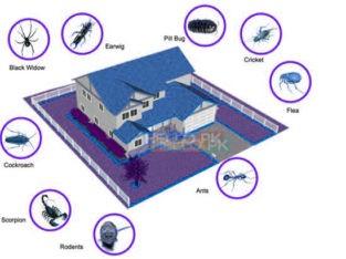 Fumigation, Pest Control, Deemak, Khatmal, Lalbaig
