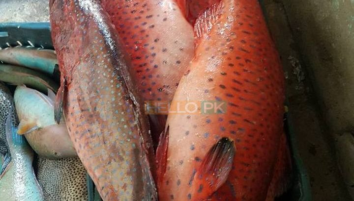 Fresh Seafood at your doorstep   Export Quality