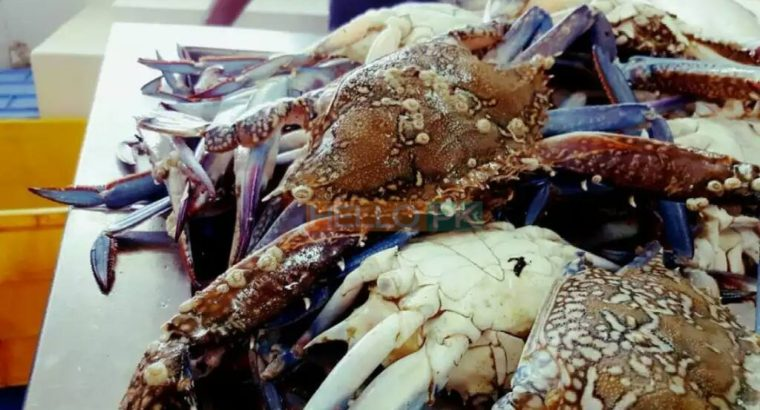 Fresh Seafood at your doorstep | Export Quality