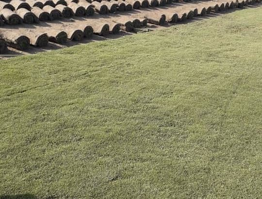 Best Korean & fine dhaka Grass available at my farm for schools colleges stadium or parks