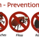 Termite Fumigation,Rats,Rodent Control Kitchen Gell Treatment No Smell