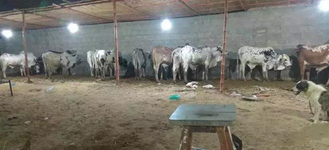 Qurbani Ka Best Janwar Hum Se Lain.Fazal Cattle Farm